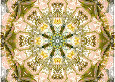 Mandalas from the Heart of Freedom 15