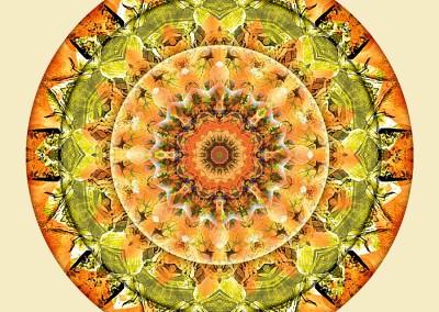 Mandalas of Deep Trust 10
