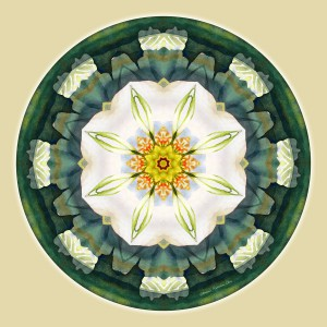 Mandalas for a New Earth, No. 5
