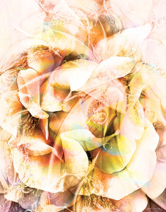 Floral Abstract 16