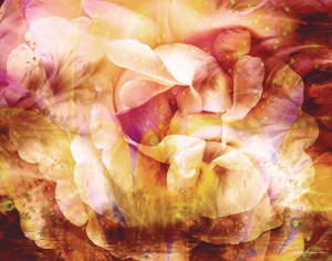Floral Abstract 22