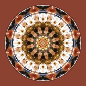 Mandalas of Deep Trust 11