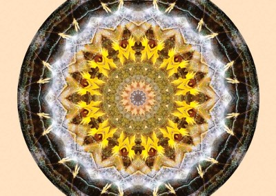 Mandalas from the Heart of Peace 10